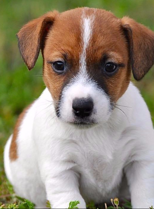 puppy-patches-e1502233940339.jpg
